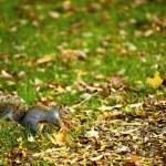 Squirrel — Stock Photo #17188029