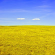 Yellow Meadow — Stock Photo #17426207