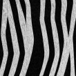 Royalty-Free Stock Photo: Zebra Coat Background
