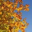 Orange Fall Branches — Stock Photo