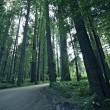 Redwood Forestry — Stock Photo