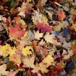 Autumn Leaves Background — Stock Photo #17439735