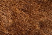 Brown Bear Coat — Stock Photo