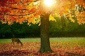 Val seizoen in het park — Stockfoto