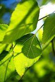 Summer Vegetation — Stock Photo