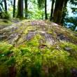 Stock Photo: Mossy Picnic Table