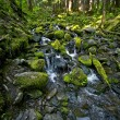 Rocky Mossy Creek — Stock Photo