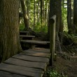 Wooden Pathway - Photo