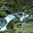 Mossy Mountain River — Stock Photo