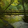 Stock Photo: Forest Bridge