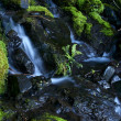 Stock Photo: Mossy Creek