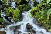 Cold Mountain Stream — Stock Photo