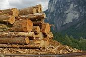 Wood Logs Stock Pile — Stock Photo