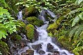 Rocky Mossy Creek — Stock Photo