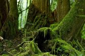 Mossy Forest Details — Stock Photo