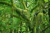 Mossy Tree — Stock Photo