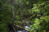 Trochę leśnego potoku — Zdjęcie stockowe