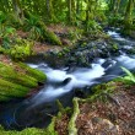 Rainforest Creek — Stock Photo #17636229