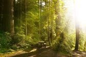 Sunny Rainforest — Stock Photo