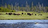 Yellowstone Landscapes — Stock Photo