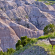 Badlands Wildlife Animals — Stock Photo #17640539