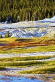 Yellowstone Harsh Conditions — Stock Photo