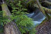 Glacier Creek — Stock Photo