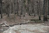 Dead Forest Landscape — Stock Photo