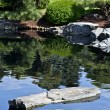 Stock Photo: Garden Pond