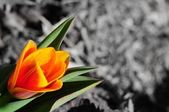 Colors of the Spring — Foto Stock