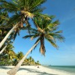 Stock Photo: Key West Florida