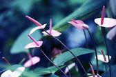 Exotic Tropical Plants — Stock Photo