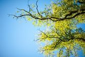 Spring Trees — Stock Photo