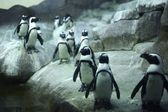 Arctic Pinguins — Stock Photo
