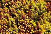 小さな植物 — ストック写真