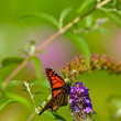 Summer Butterfly — Stock Photo