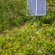 Solar Energy in Garden - Stock Photo