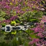Blooming Garden — Stock Photo #18198073