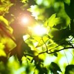 ������, ������: Summer Shine