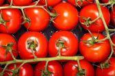 西红柿包 — 图库照片