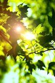 Summer Shine — Stock Photo