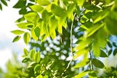 Green Summer — Stock Photo