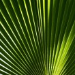 Green Palm Leaf Background — Stock Photo #18233301