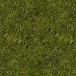 Grass Field Texture — Stock Photo #18234769