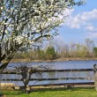 Spring Tree farm — Stockfoto