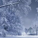 Winter Scenery — Stock Photo