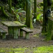 Bench in Mossy Forest - Stock Photo
