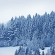 Snowy Forest Landscape - Stock Photo