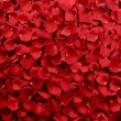 Red Rose Petals Background - Stock Photo