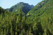 卡斯卡德山脉美国 — 图库照片